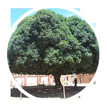 Un árbol de encanto